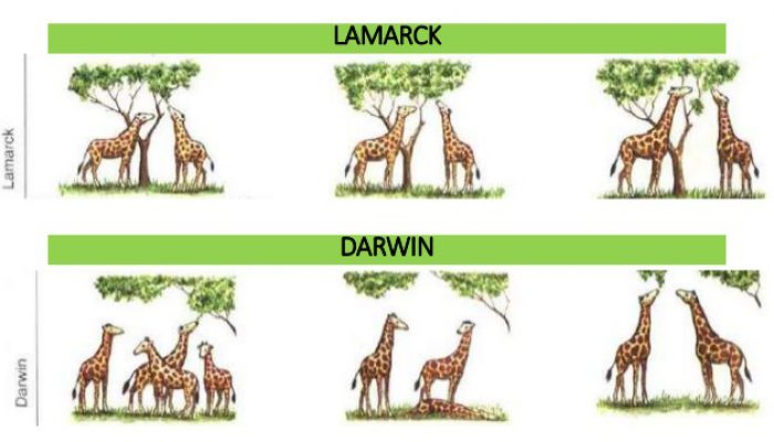 12 darwin-lamarck-giraffe_slideshare.net